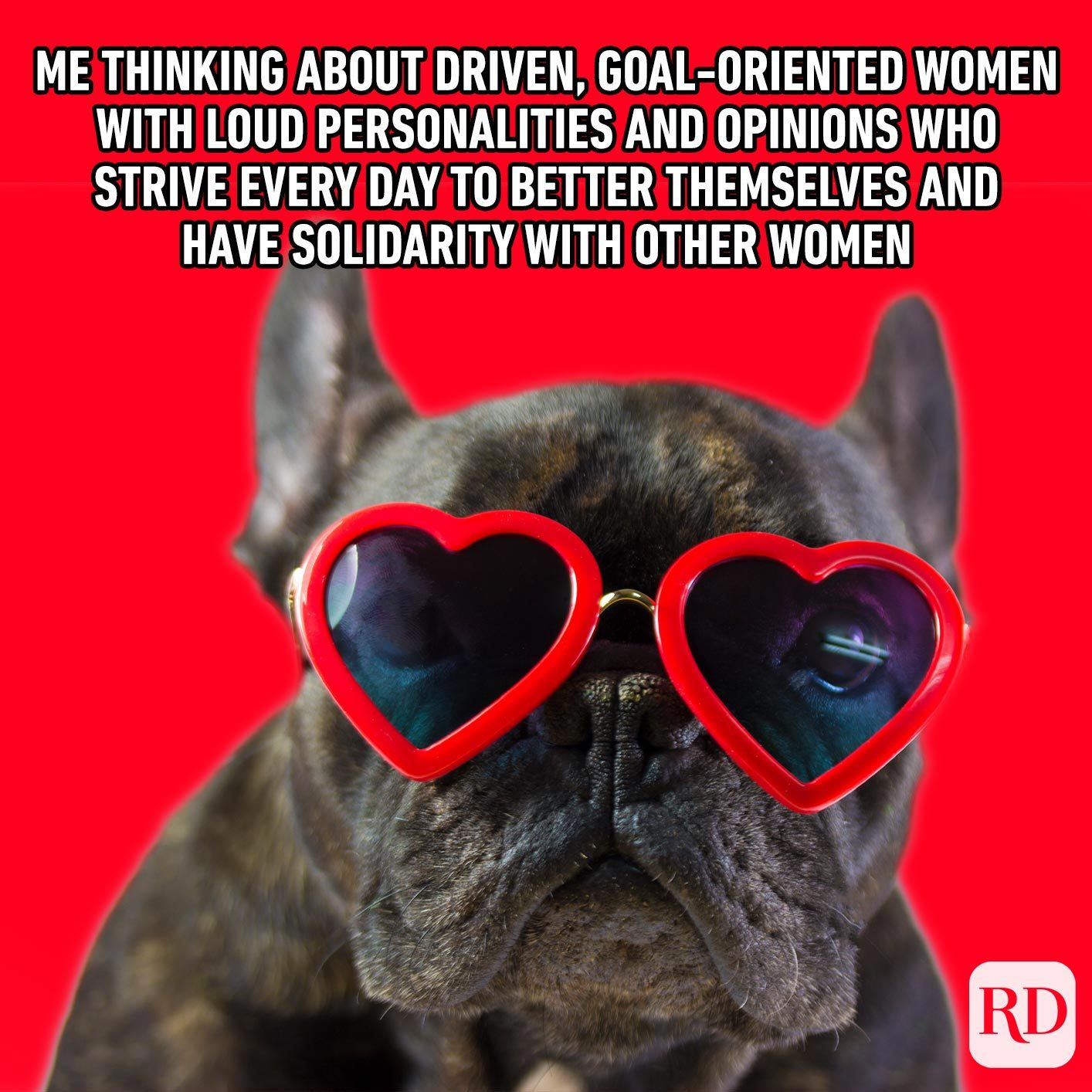 Dog with heart glasses. Meme text: Me thinking about driven, goal-oriented women with loud personalities and opinions who strive every day to better themselves and have solidarity with other women
