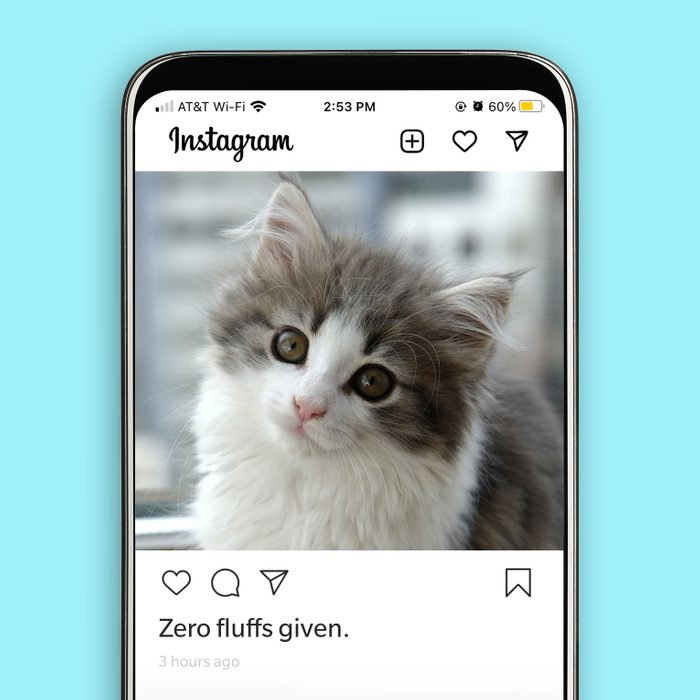 """Instagram post of adorable fluffy cat with the caption """"zero fluffs given."""""""