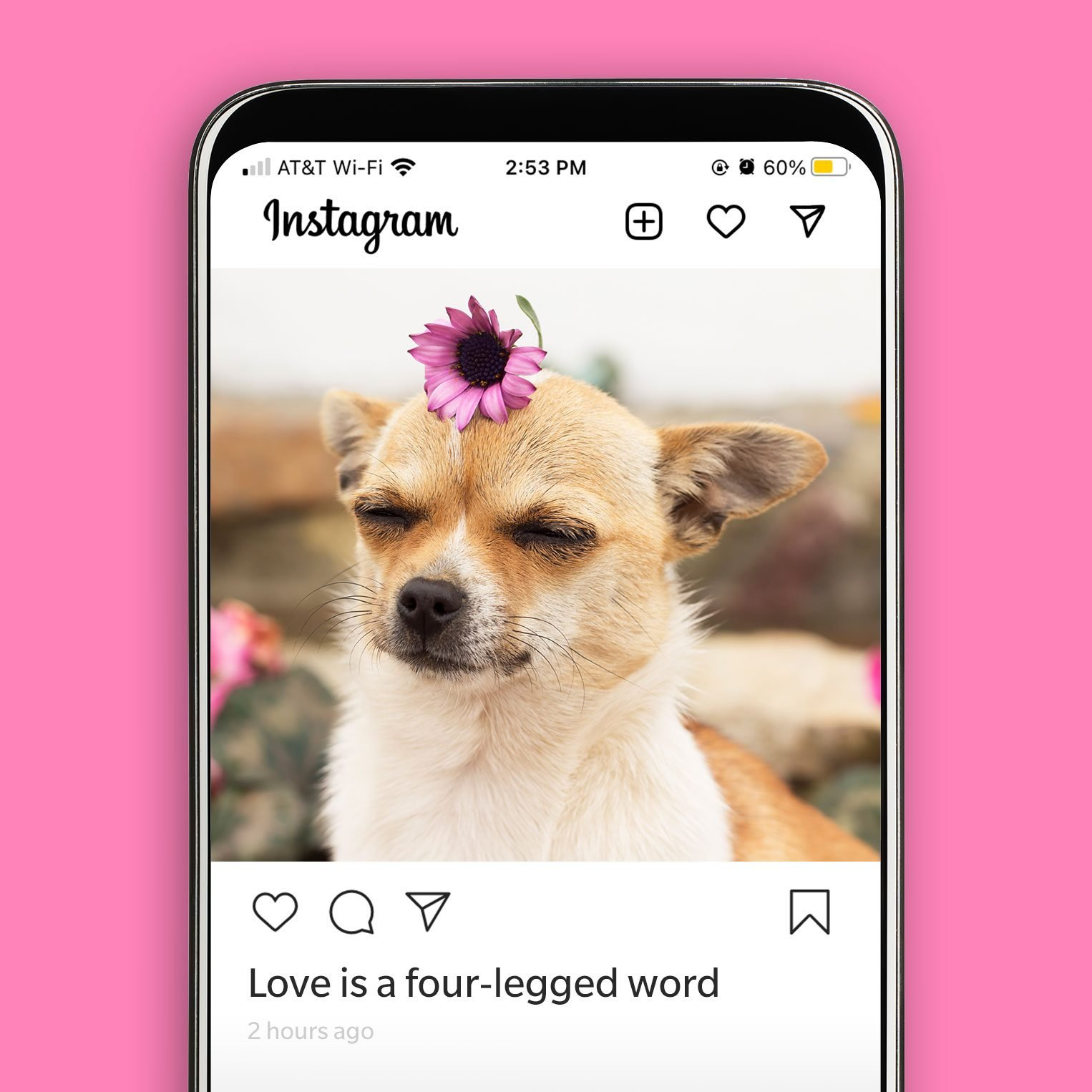 Phone showing an instagram screen with a Chihuahua with a flower on its head. Caption: Love is a four-legged word.