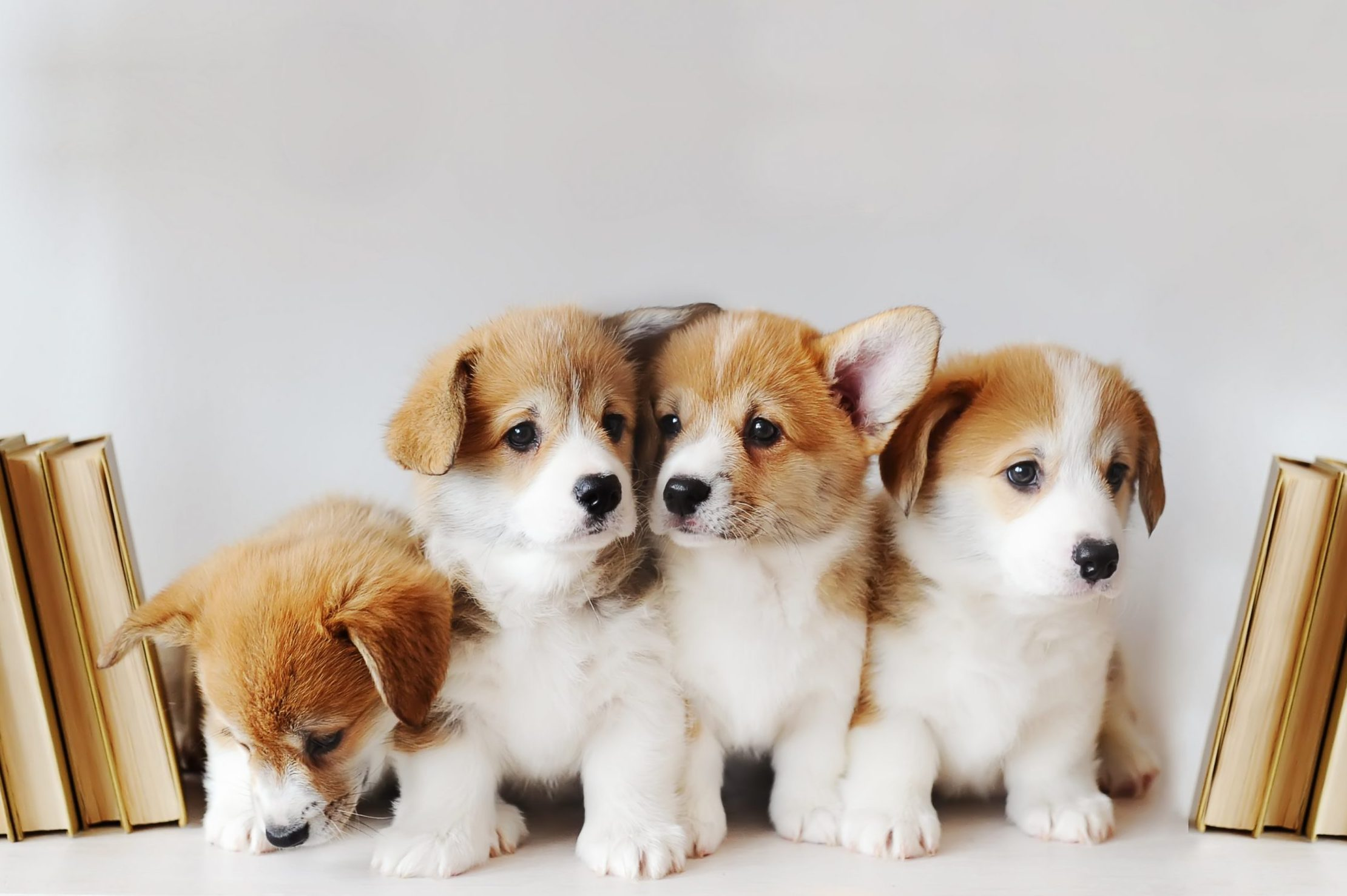 50 Cute Puppy Pictures That You Need to See — Puppy Pictures | Reader's  Digest