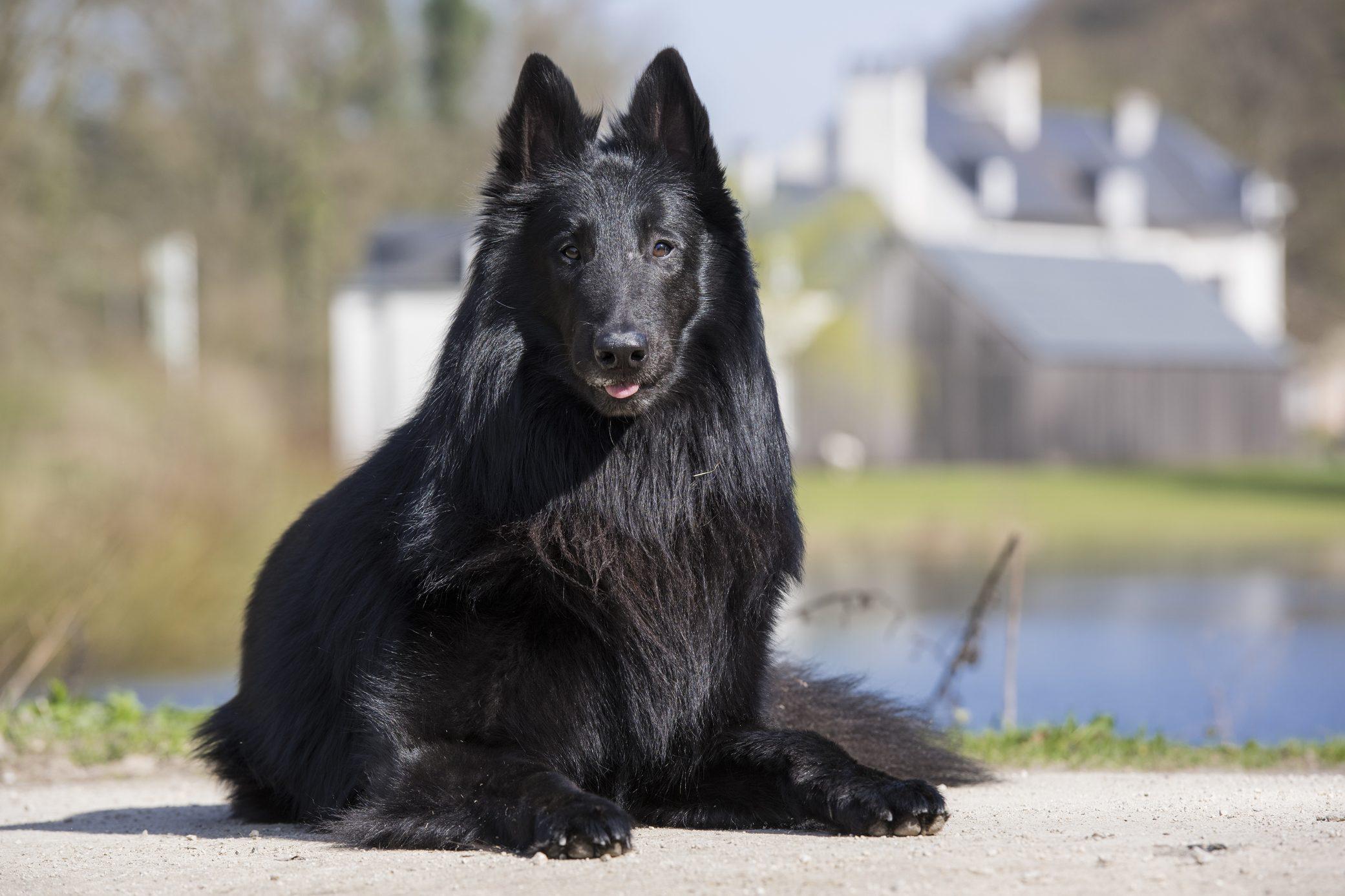 Greensdael Dog