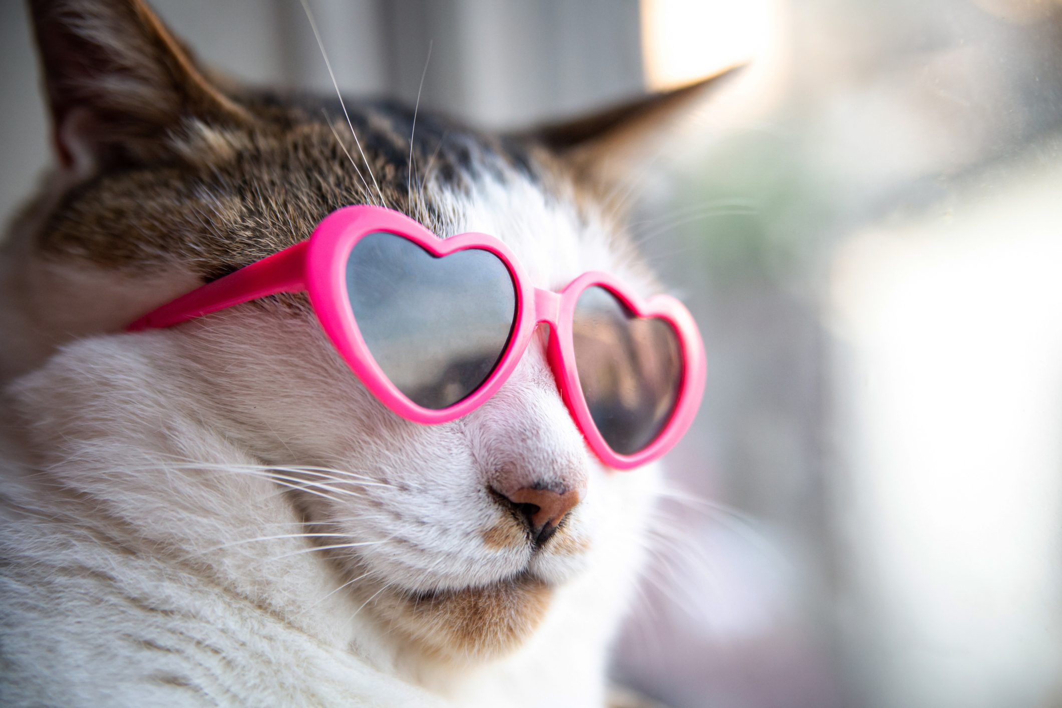 Cat wearing heart shaped sunglasses