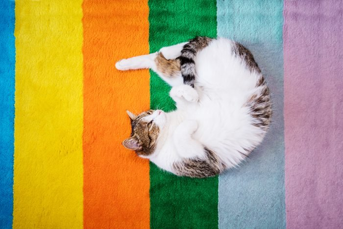 Can cats see color