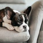 How to Know When Your Dog Is Bored (and What to Do)