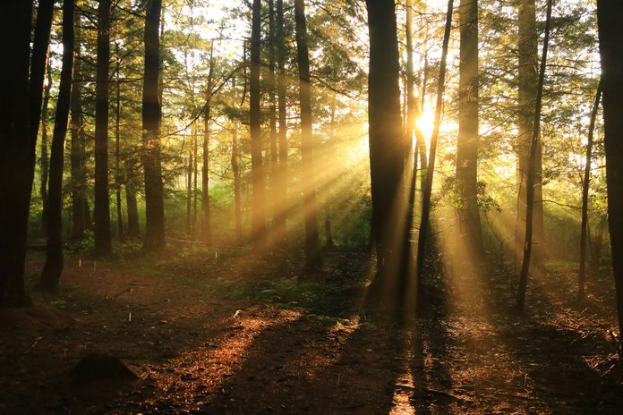 a low sun shines it's rays through trees in a forest in autumn