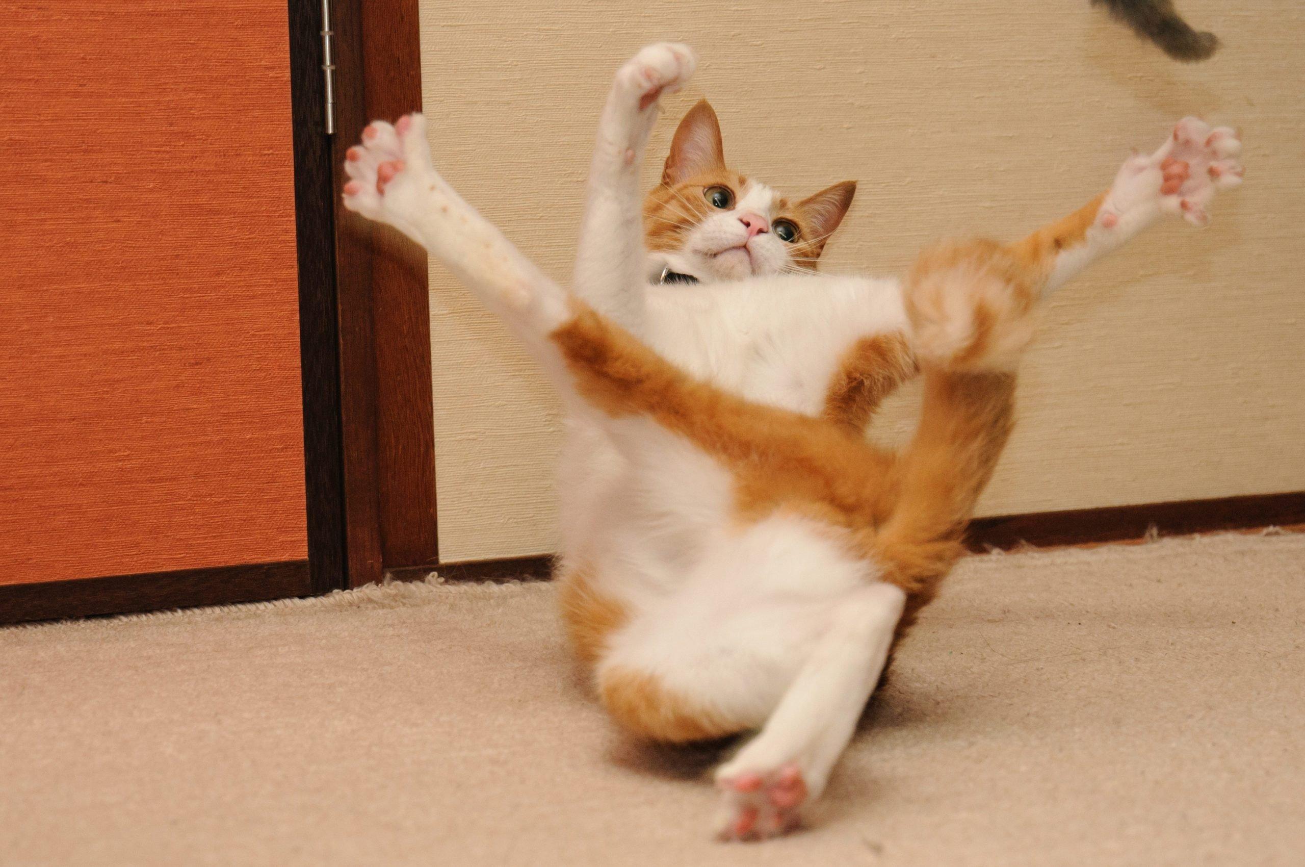Cat flailing limbs