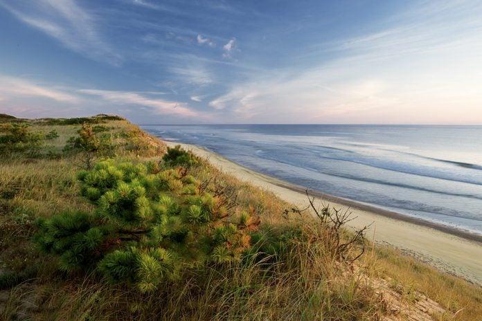 Dune's edge, pitch pine, Marconi beach, wellfleet, Cape Cod national seashore.
