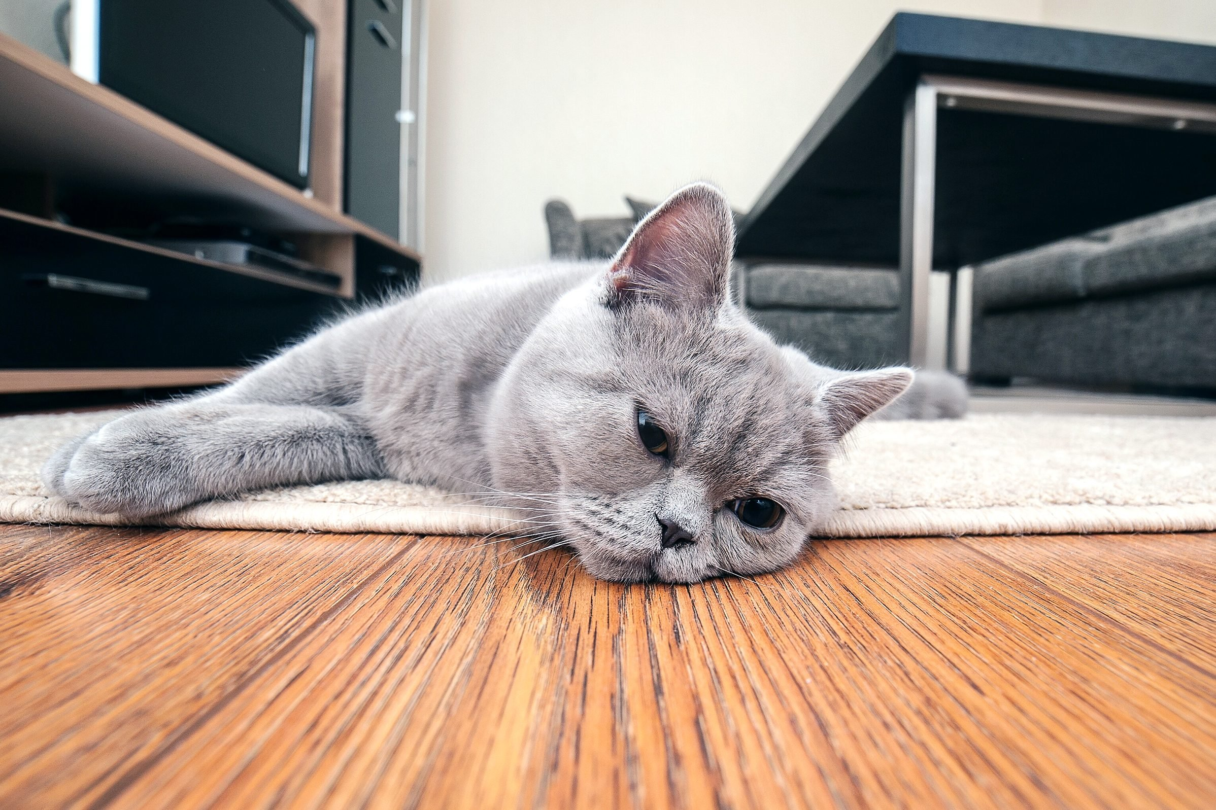 do cats get colds?