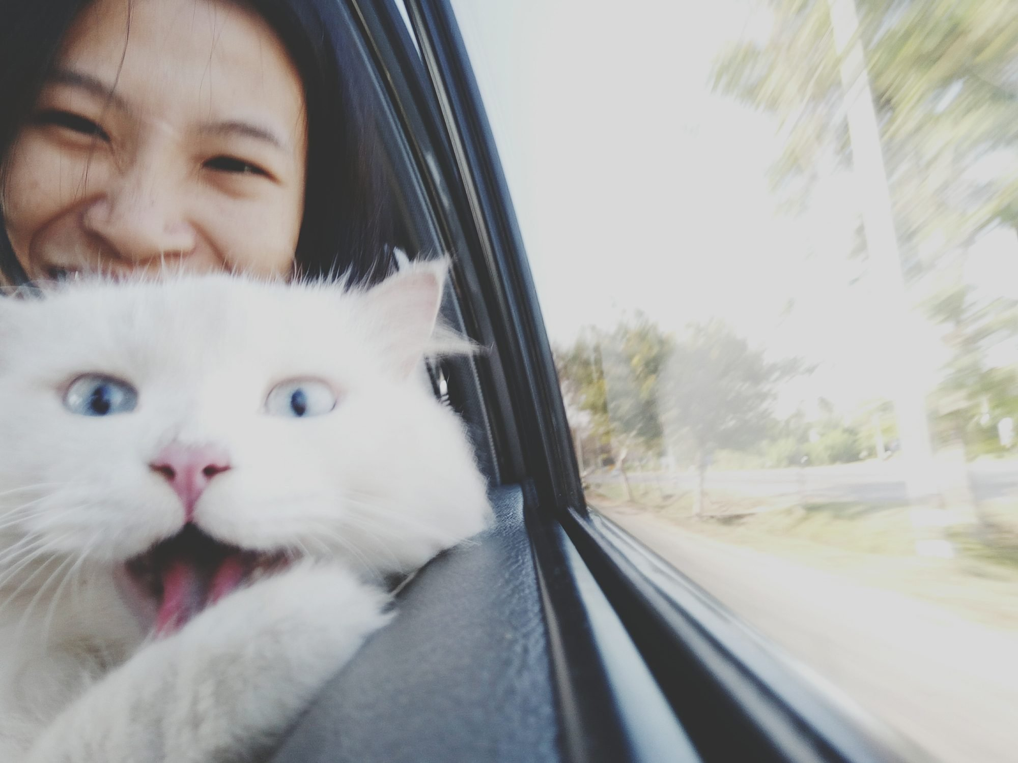 Close-Up Portrait Of Woman And Cat In Car
