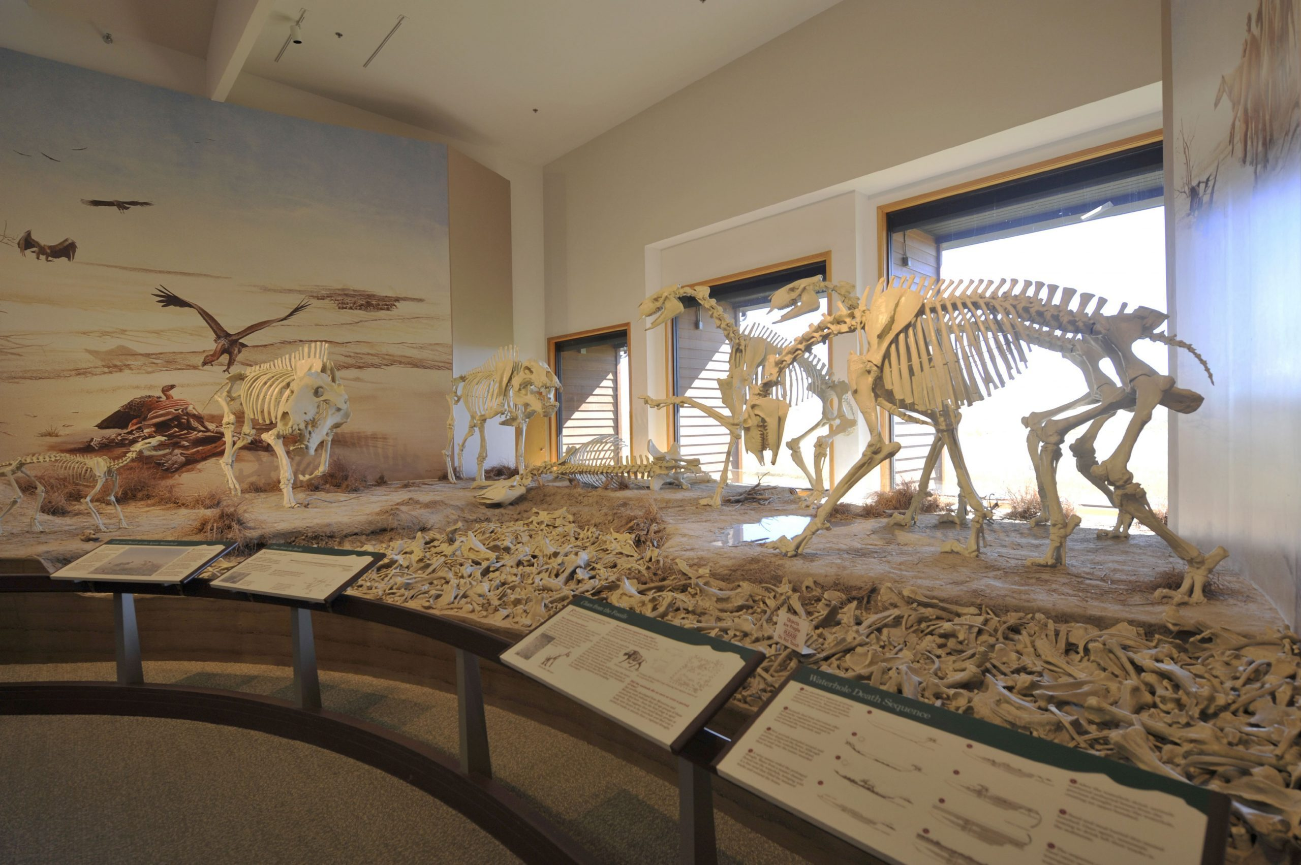 Nebraska, Agate Fossil Beds National Monument, Visitor Center, Fossil Exhibit