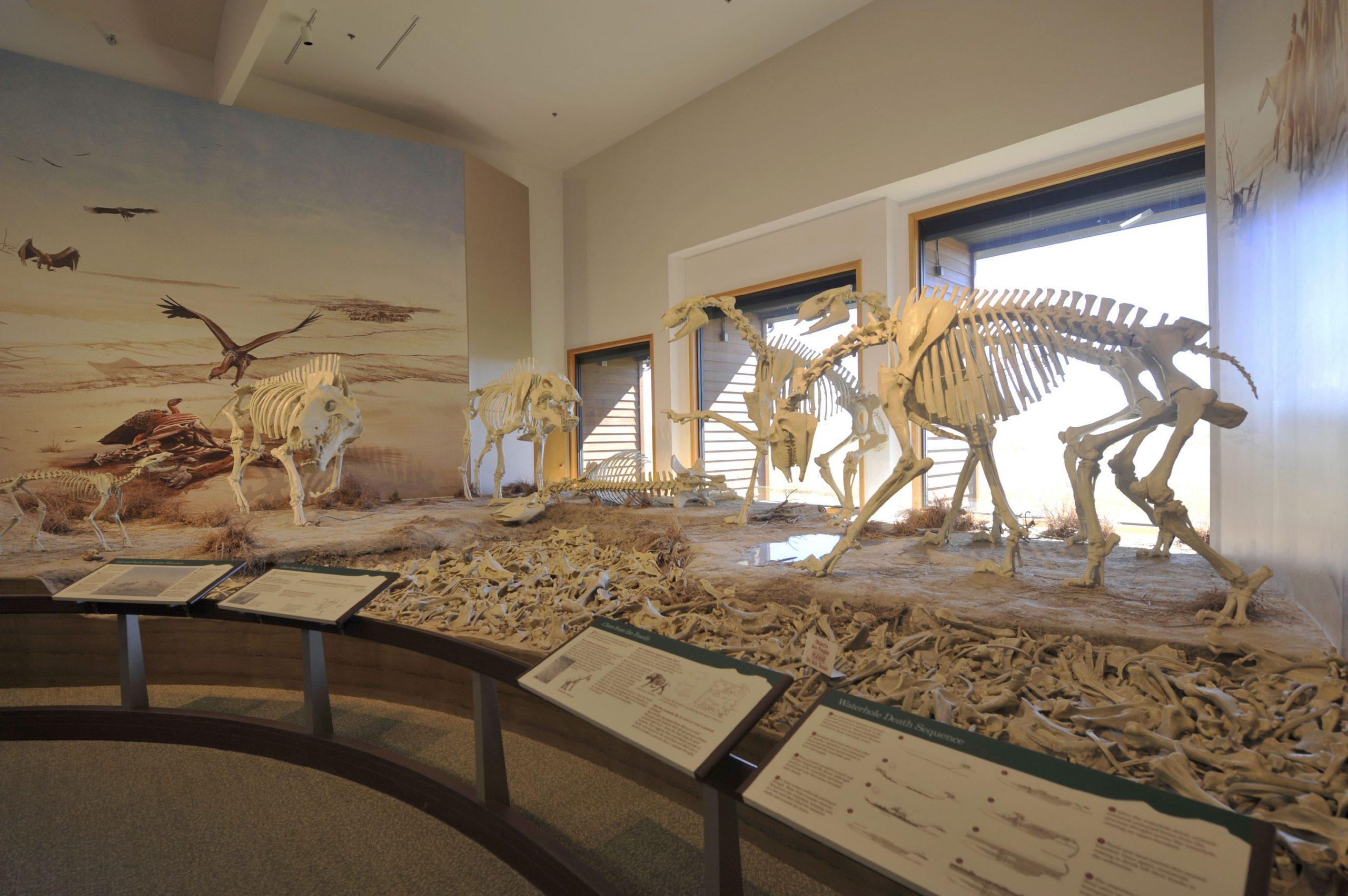 Nebraska, Agate Fossil Beds National Monument, Visitor Center, Fossil Exhibit