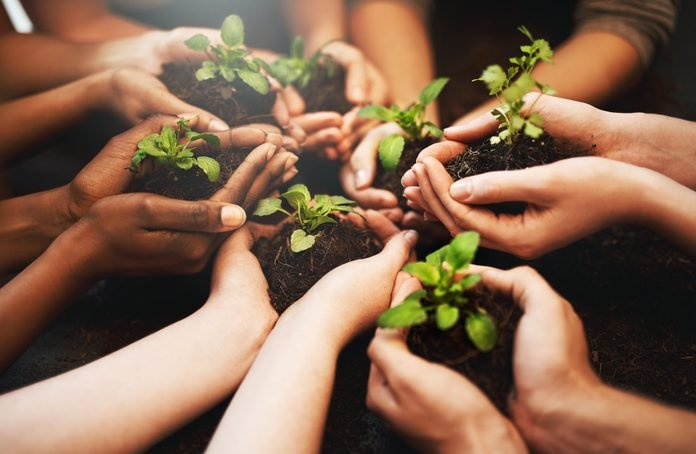 group of people's hands holding plants growing out of soil; planting trees for Earth Day concept