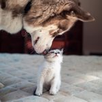 20 Adorably Funny Cat and Dog Photos You'll Instantly Love