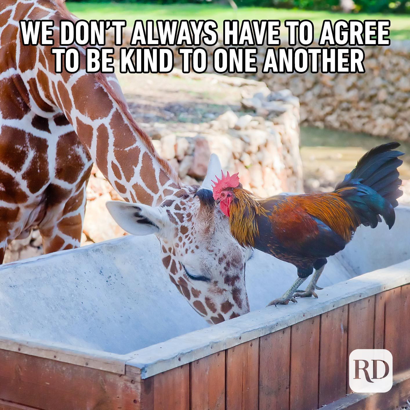 Chicken and giraffe talking. Meme text: We don't always have to agree to be kind to one another