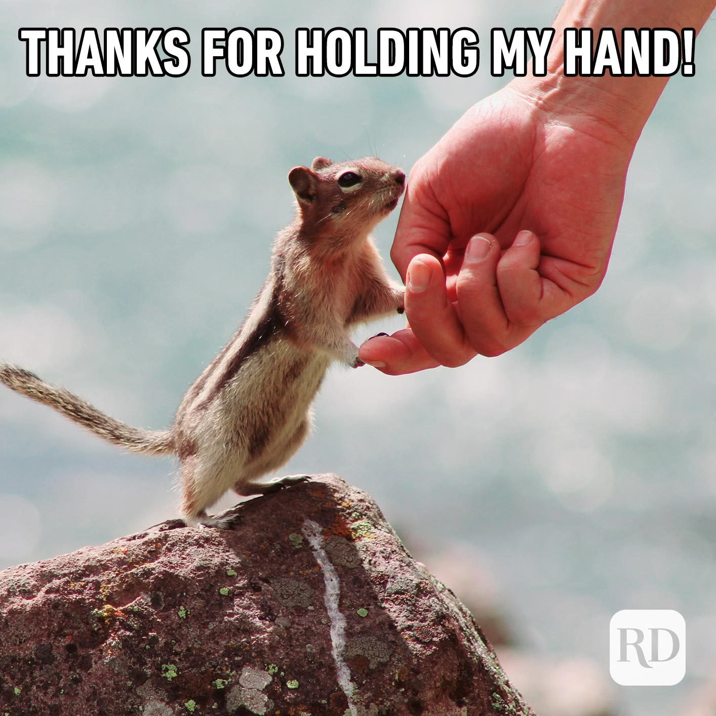 Man holding hands with chipmunk. Meme text: Thanks for holding my hand!