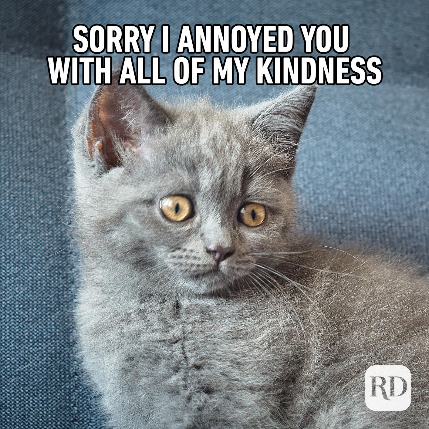 Cat looking very cute. Meme text: Sorry I annoyed you with all of my kindness
