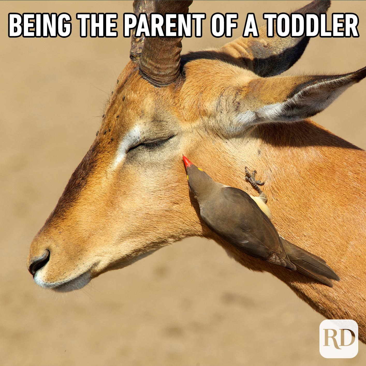 Deer being pecked in the eye by a small bird. MEME TEXT: Being the parent of a toddler