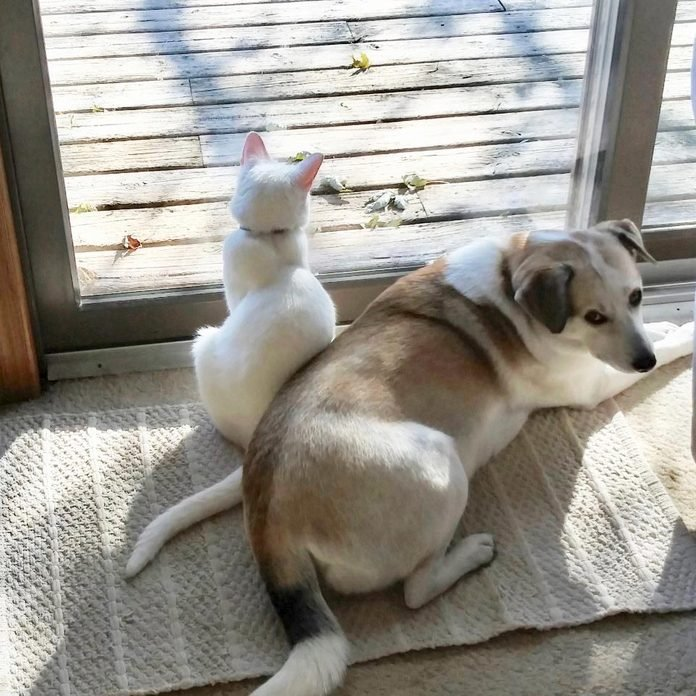 cat squeezing into space by the window where the dog is sitting