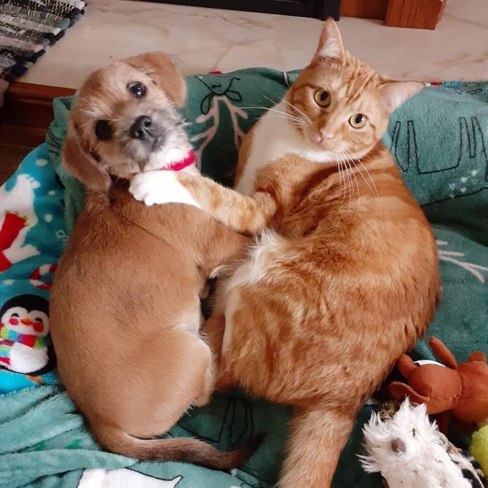 small dog and cat cuddling and looking at the camera as if they were surprised