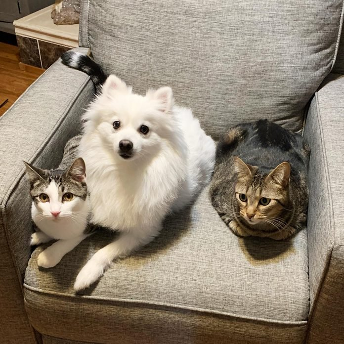 two cats and a dog sitting in one chair looking up at the camera with impatience