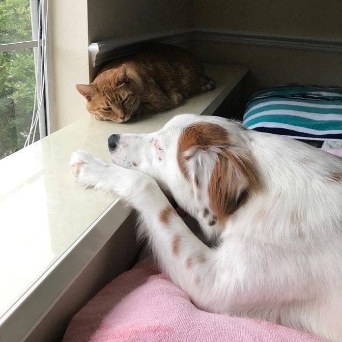 dog and cat sleep near eachother on a wide windowsill