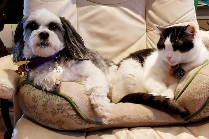 dog and cat sharing one pet bed