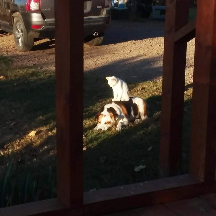 cat sitting on the dog in the yard in the bright sunshine