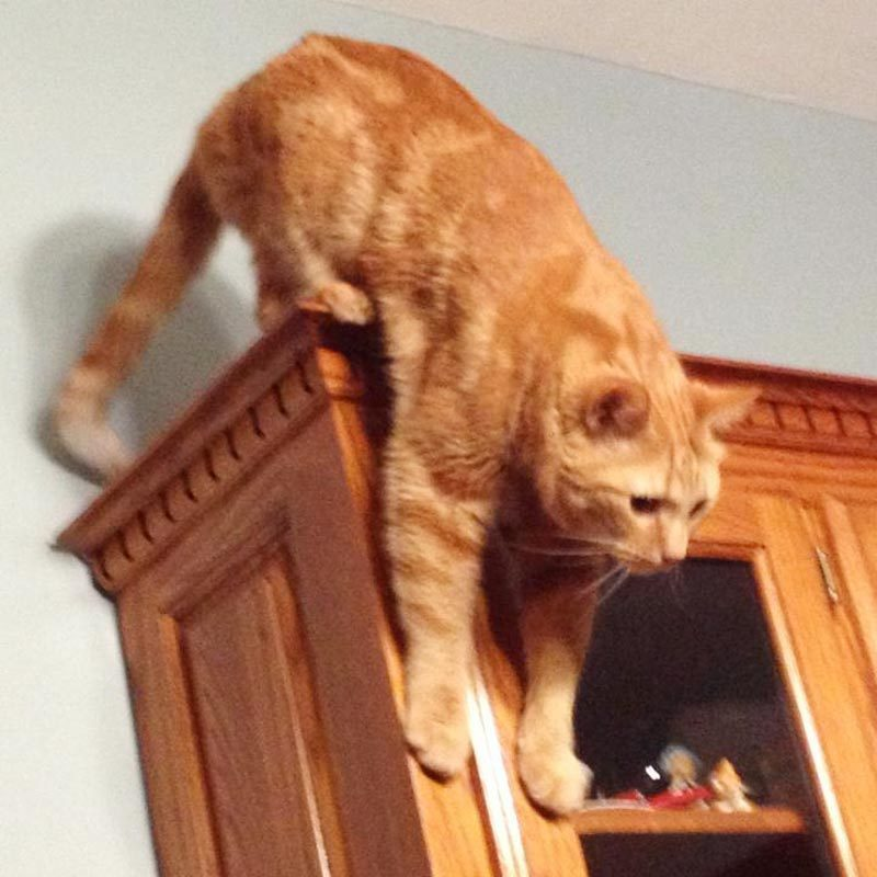 cat on top of the cabinets trying to get down