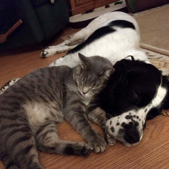 dog and cat sleeping together on the floor