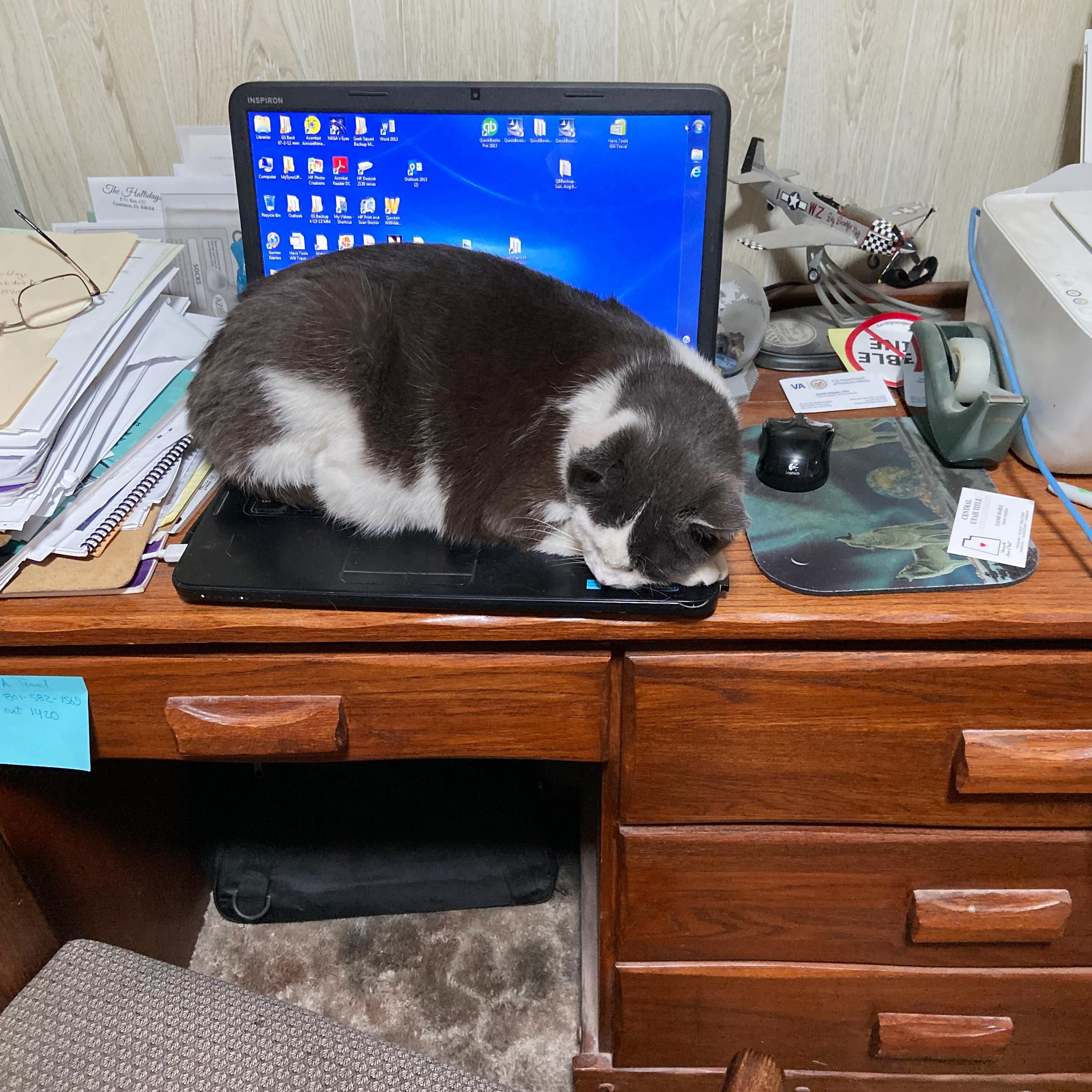 cat taking a nap on the keyboard of an open laptop