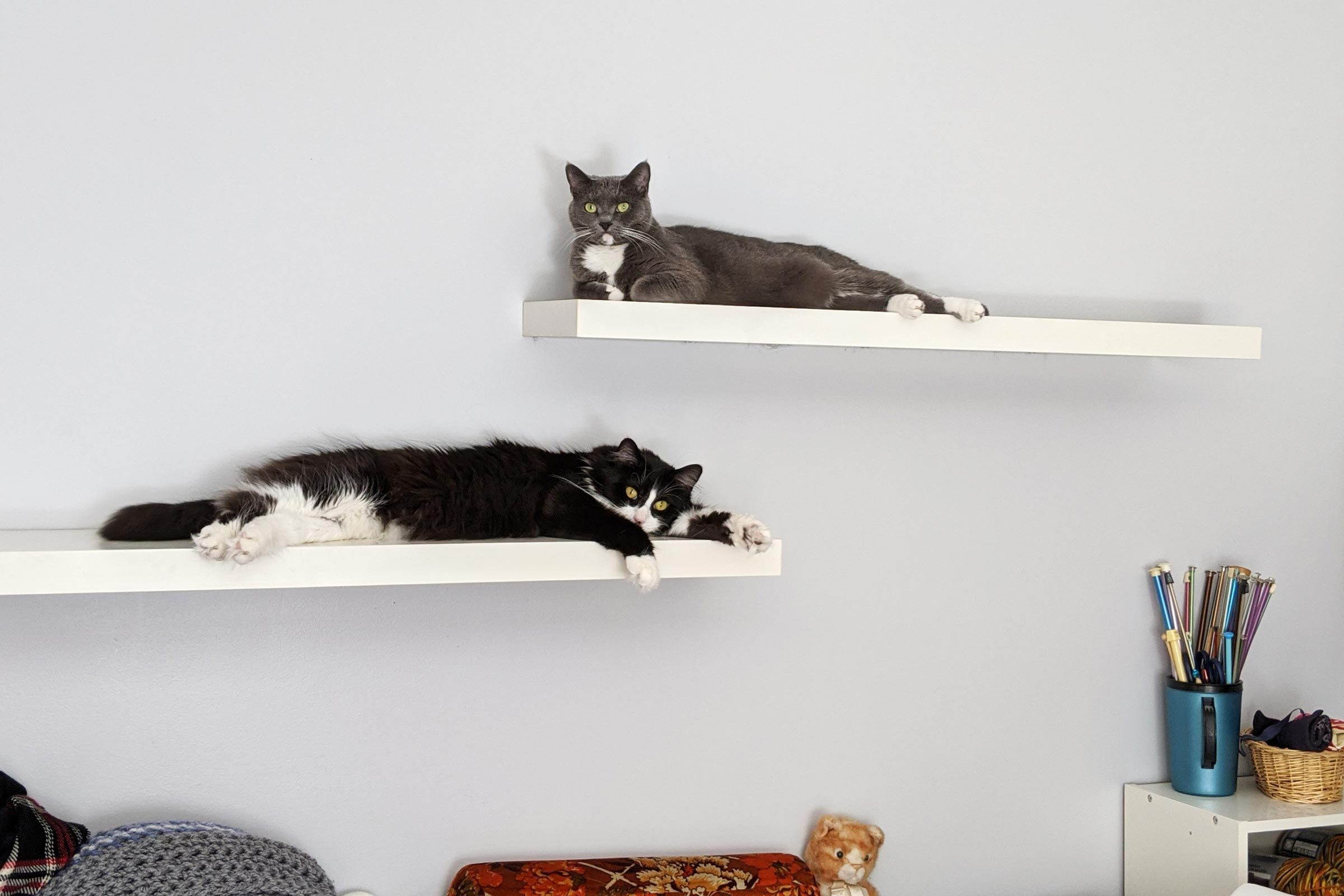 two cats sit on two floating shelves against a light gray-blue wall