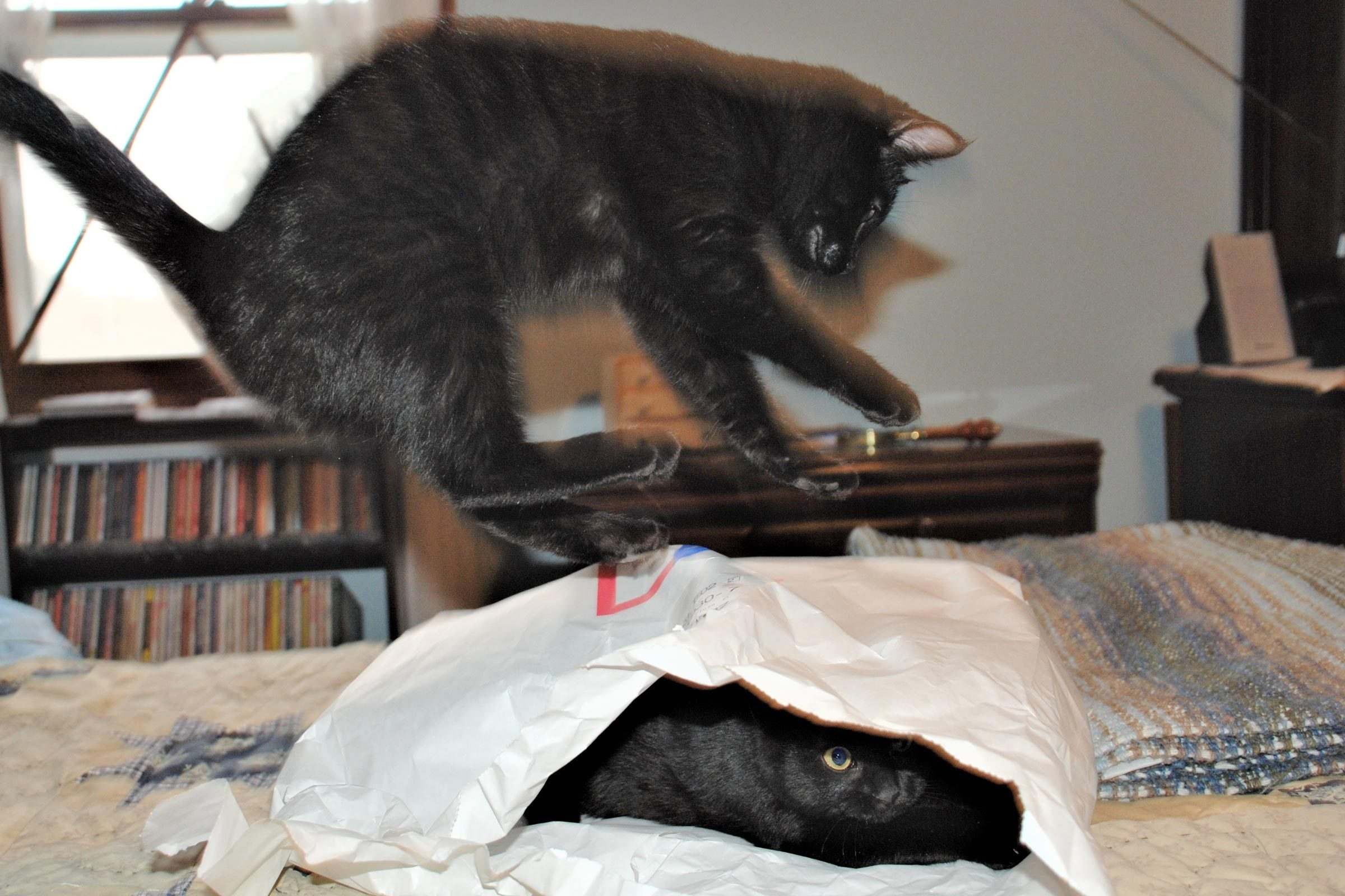 a cat mid air about to land on another cat who is iside a large envelope