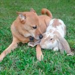 This Brave Dog Saved His Rabbit Friend from a Dog Attack