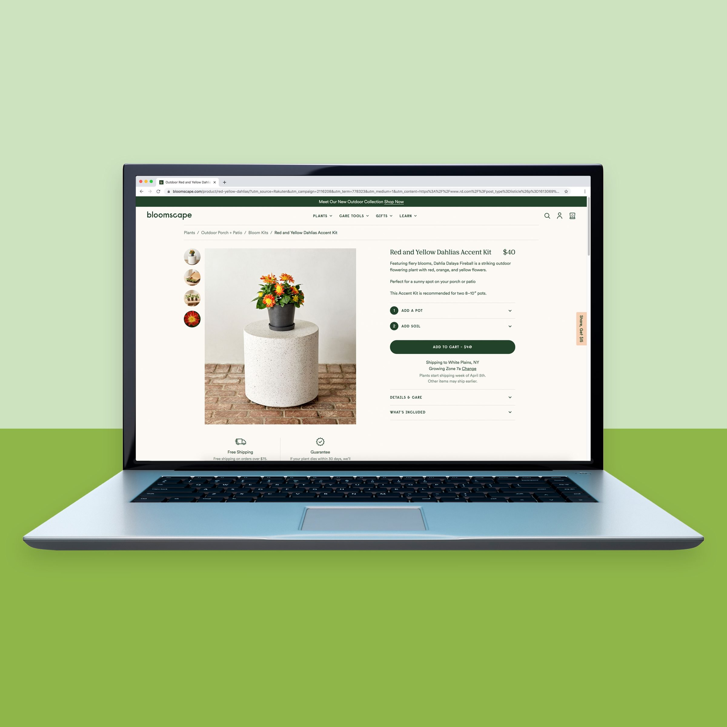 Bloomscape.com online plant shop