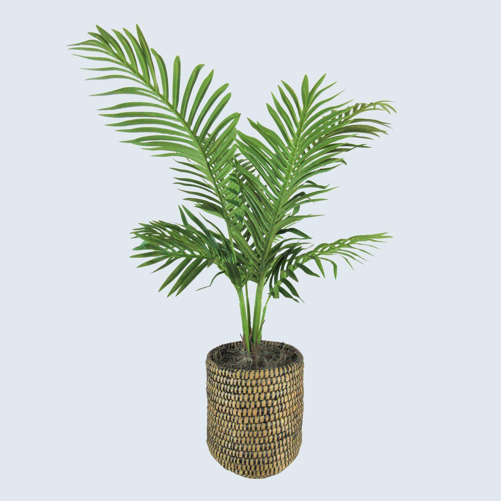 Fake parlor palm tree