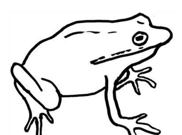timothy goodman frog sketch