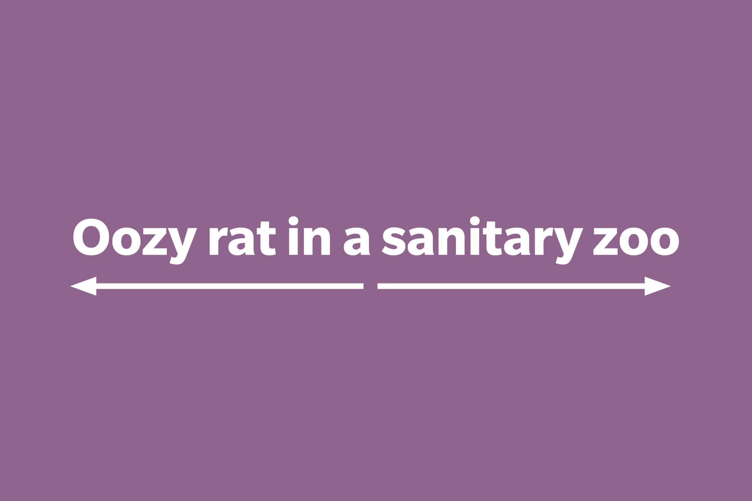 Oozy rat in a sanitary zoo