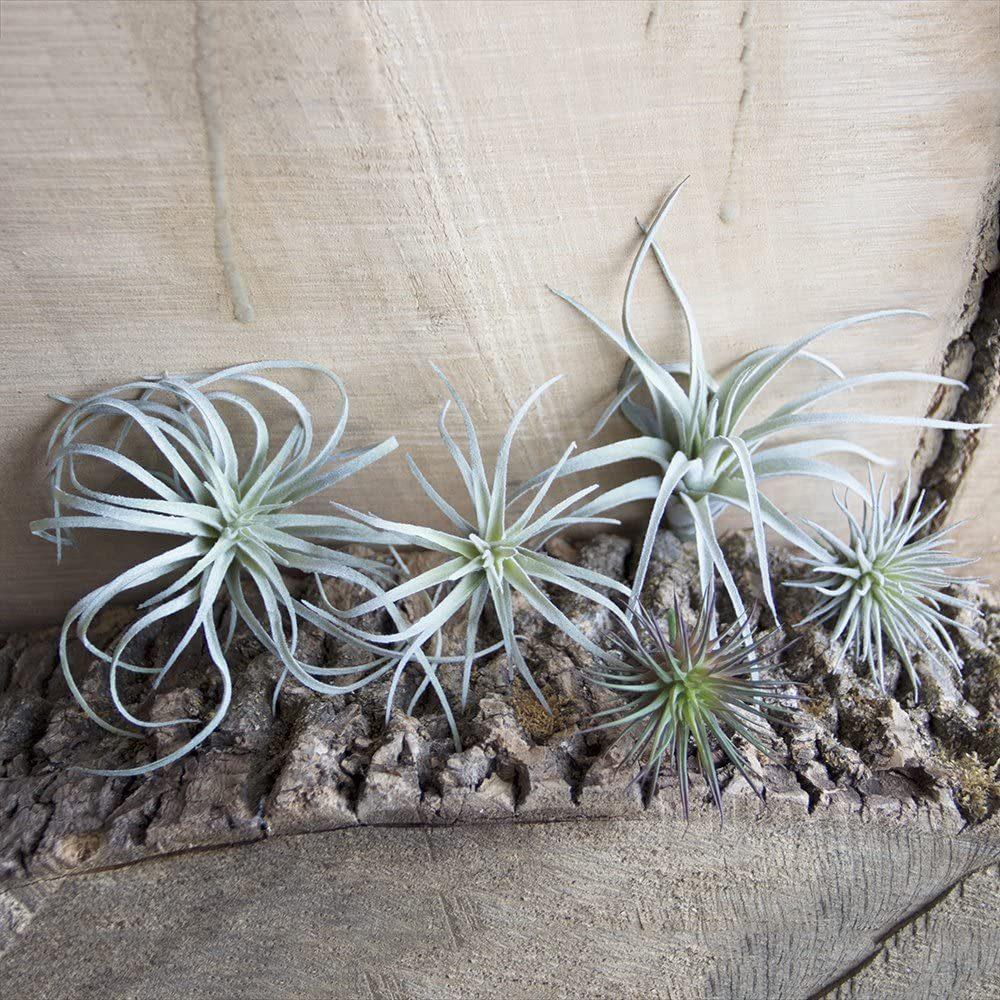 fake Bromeliad air plants