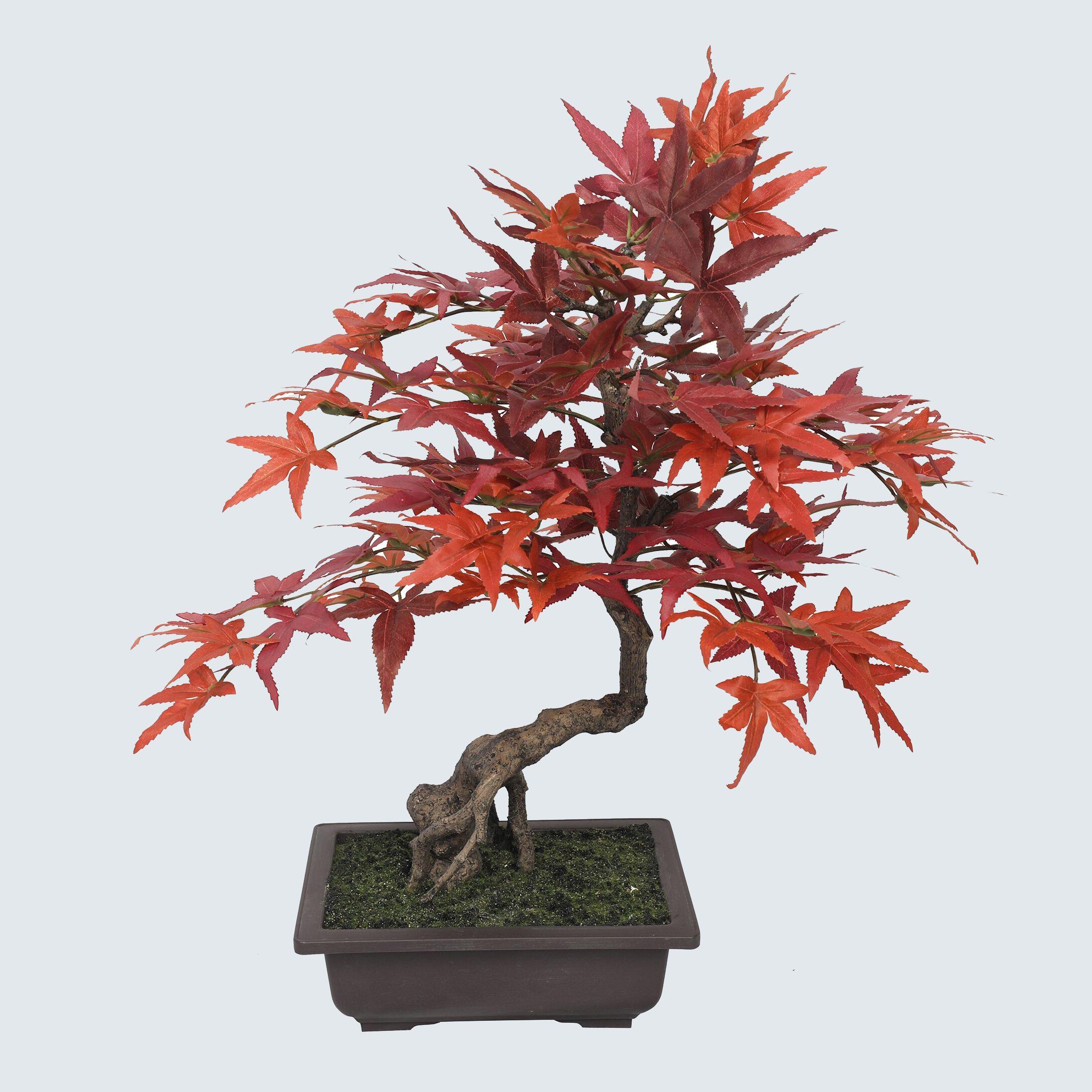 fake Bonsai tree
