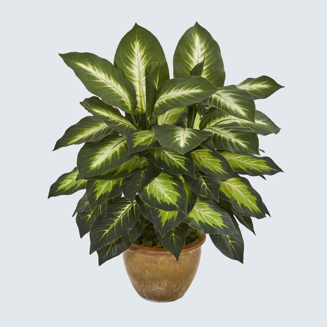 fake Dieffenbachia plant
