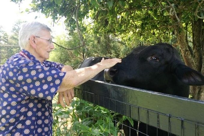 an elderly man pets Buster, the cow