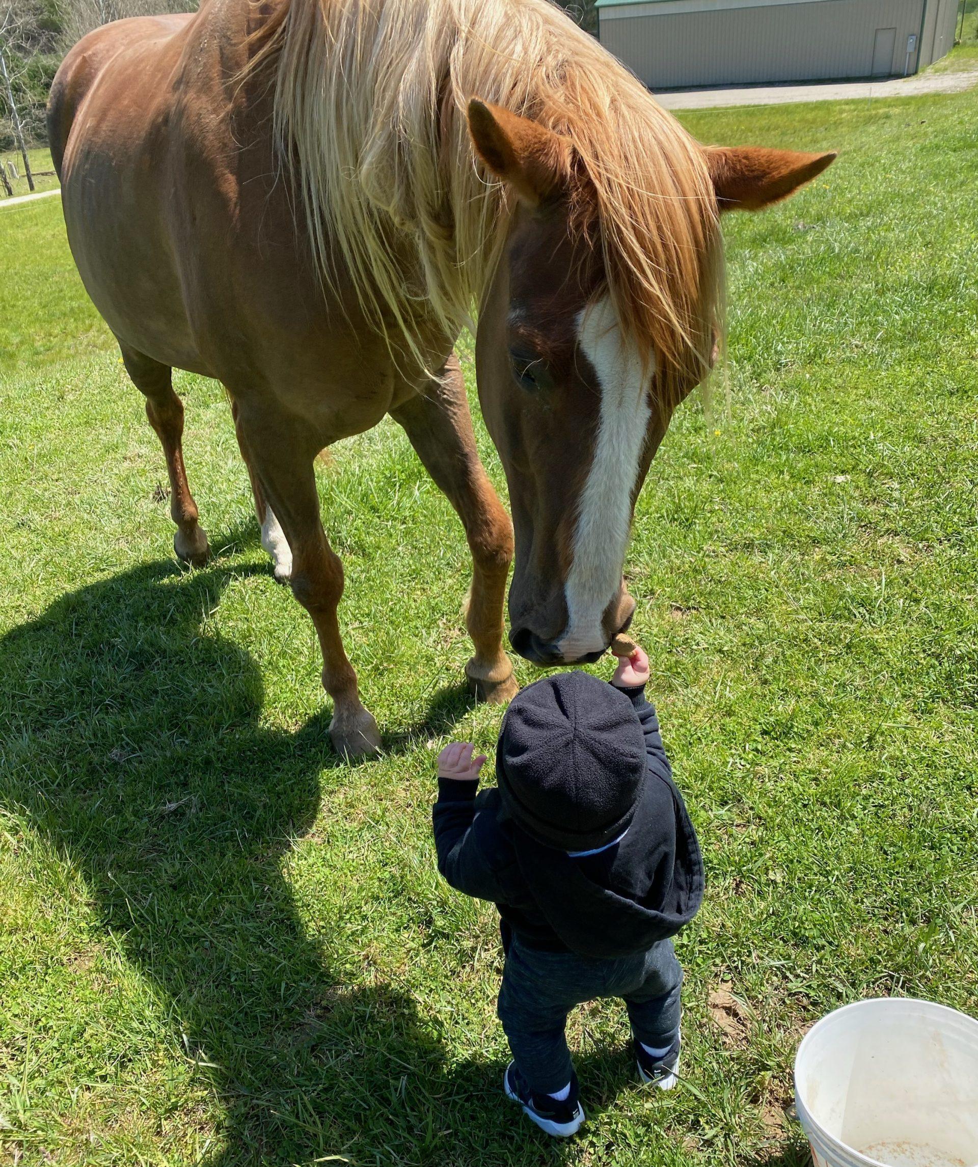 a sweet horse friend