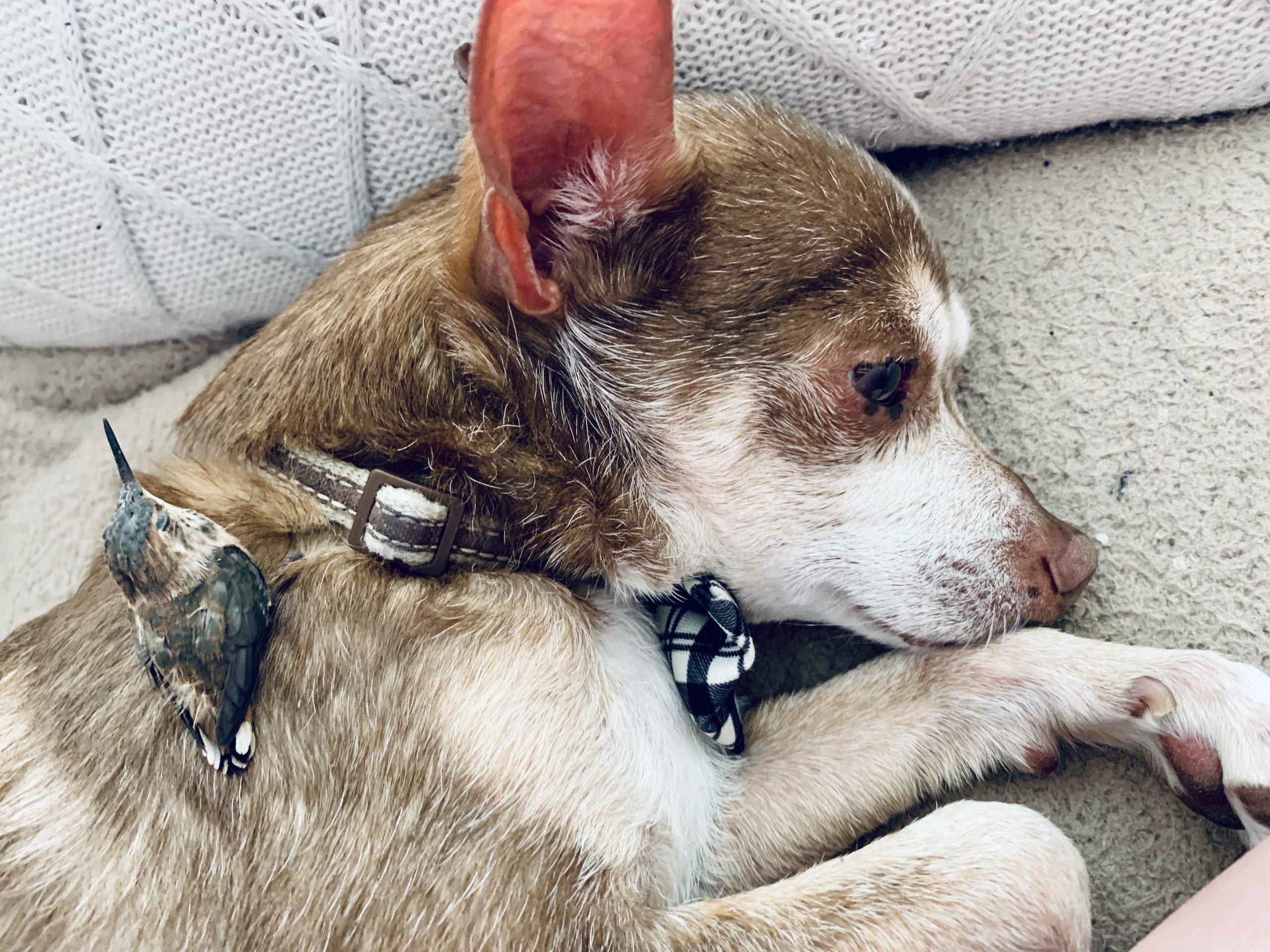 Dog that brings hummingbirds back to life