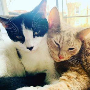 Allie Zamow's cats
