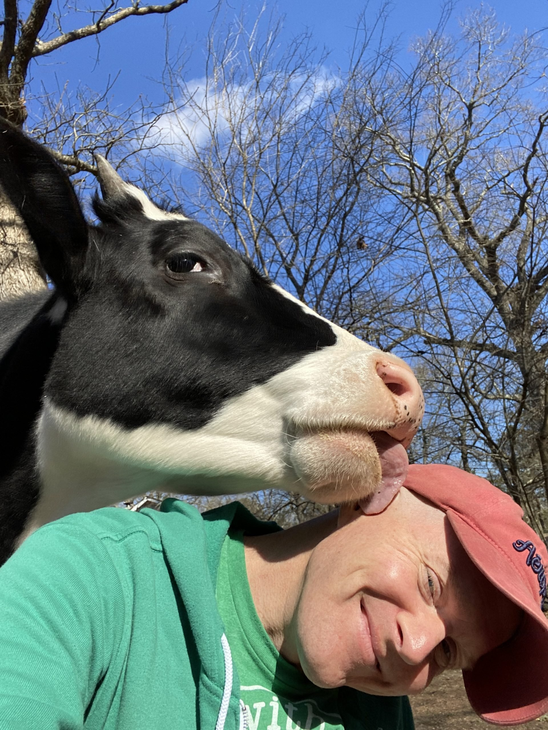Ryan Phillips and pet pal cow