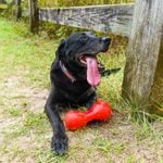 23 of the Cutest Black Dog Breeds