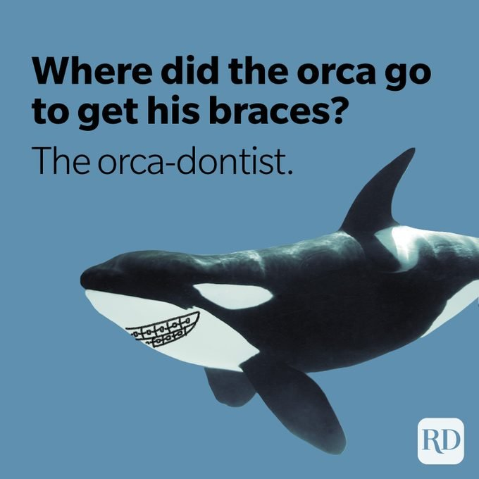 Orca whale with braces after visiting orca-dentist