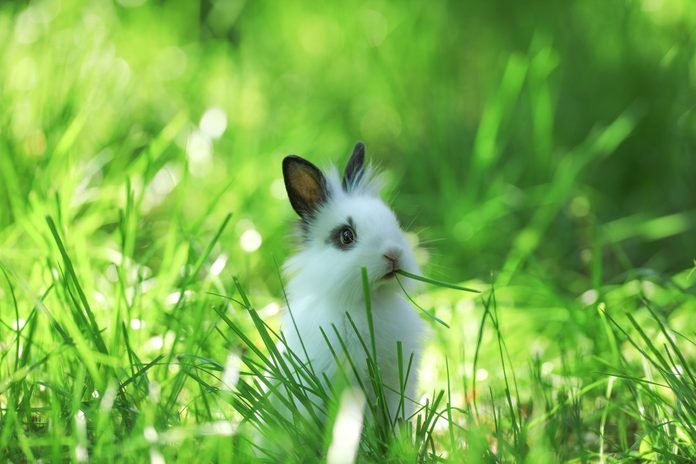 Funny white bunny on a green meadow