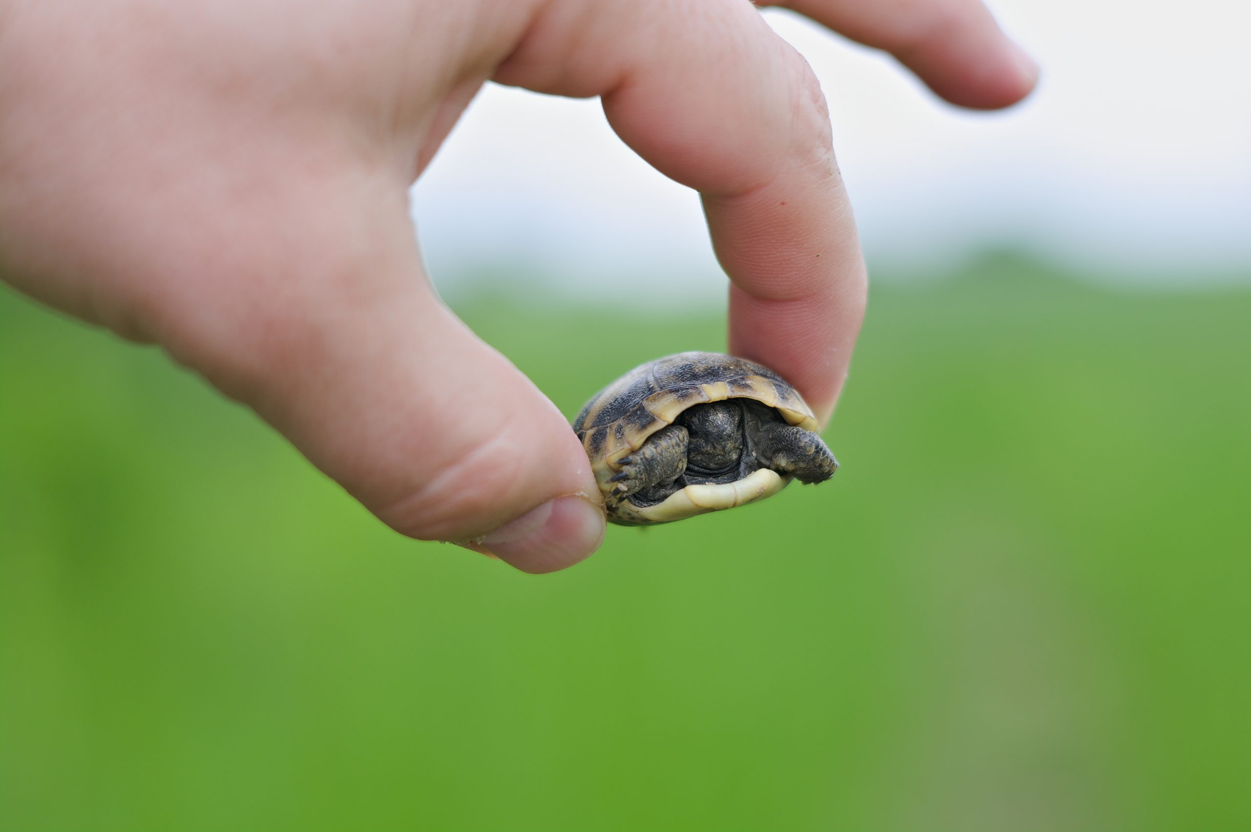 Holding baby turtle in hand