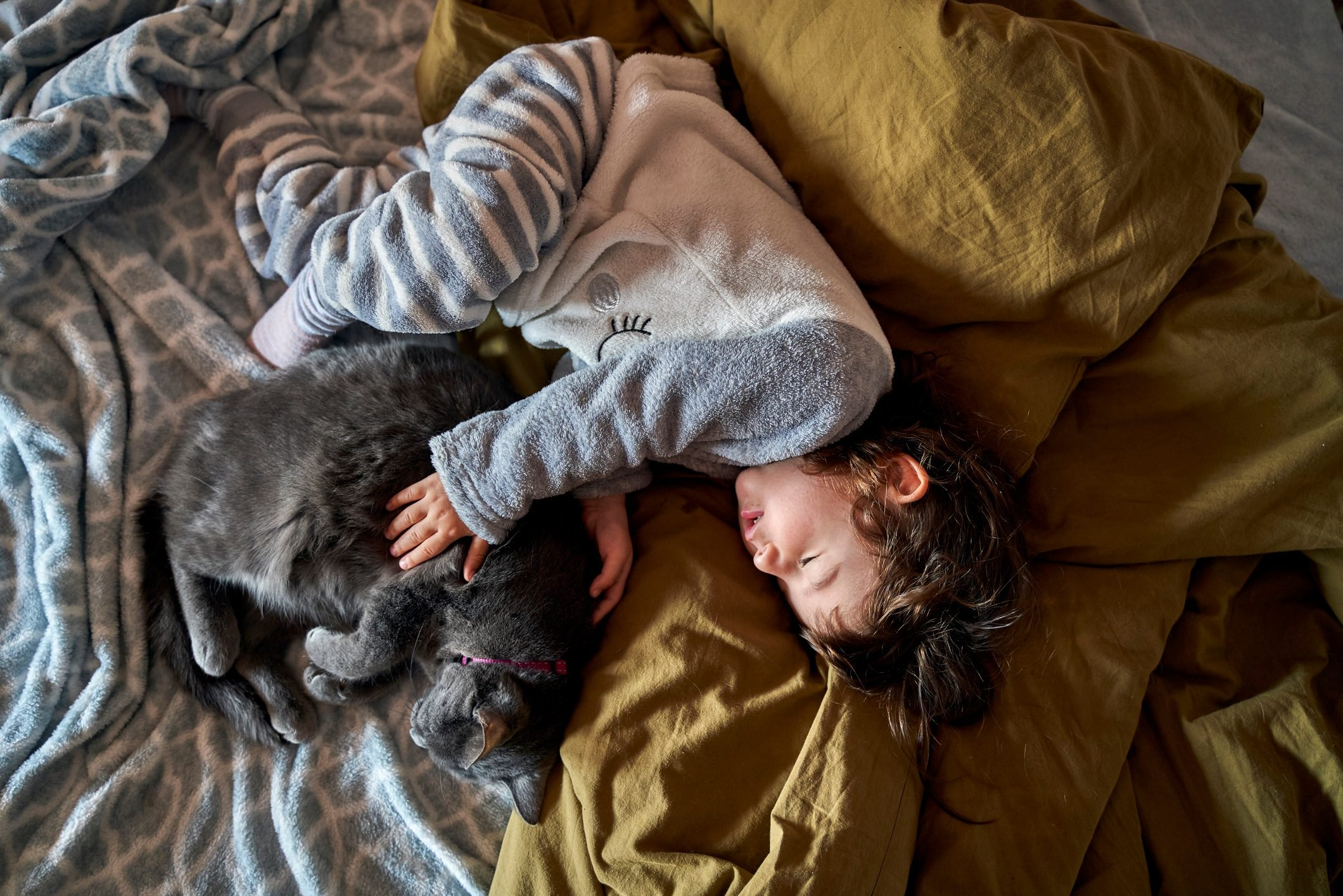 Toddler girl and grey cat sleeping on bed, top view